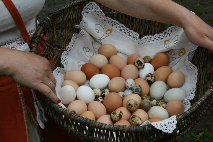 Asmeninio albumo nuotr./Ko jau ko, bet kiaušinių Paukščių kaime netrūksta