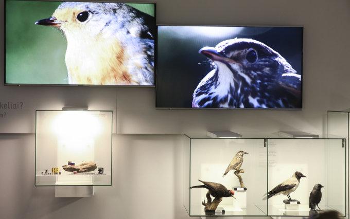 Luko Balandžio / 15min nuotr./Rekonstruota Ventės rago ornitologinė stotis