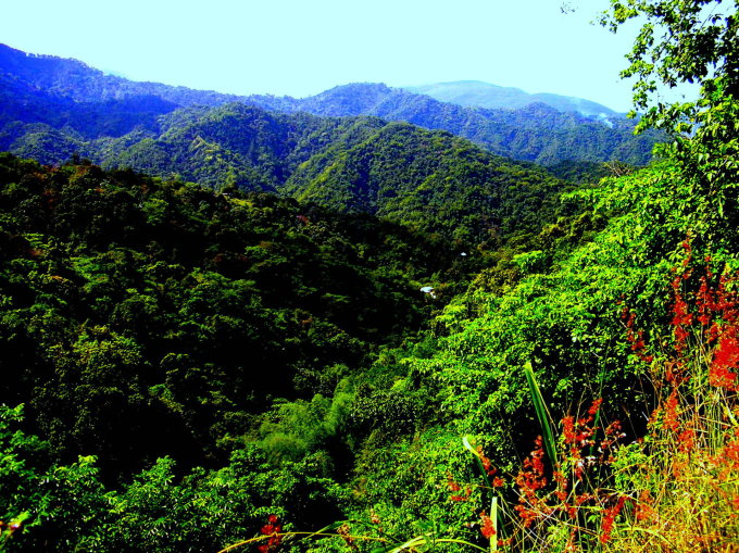 Jamaikos gamta
