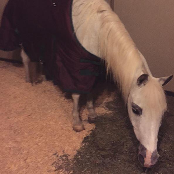 Lady Gagos ponis