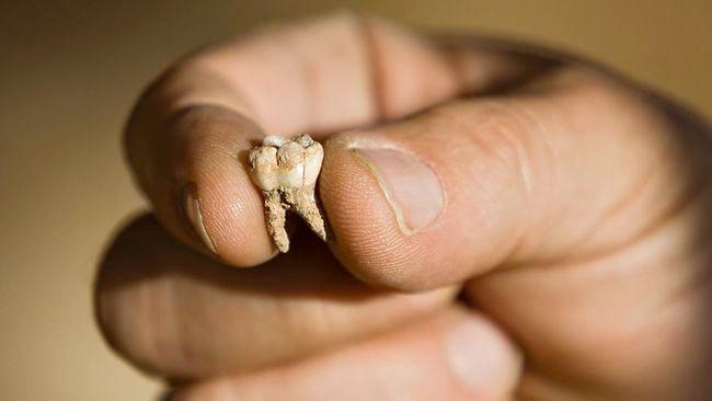 Priešistorinis dantis