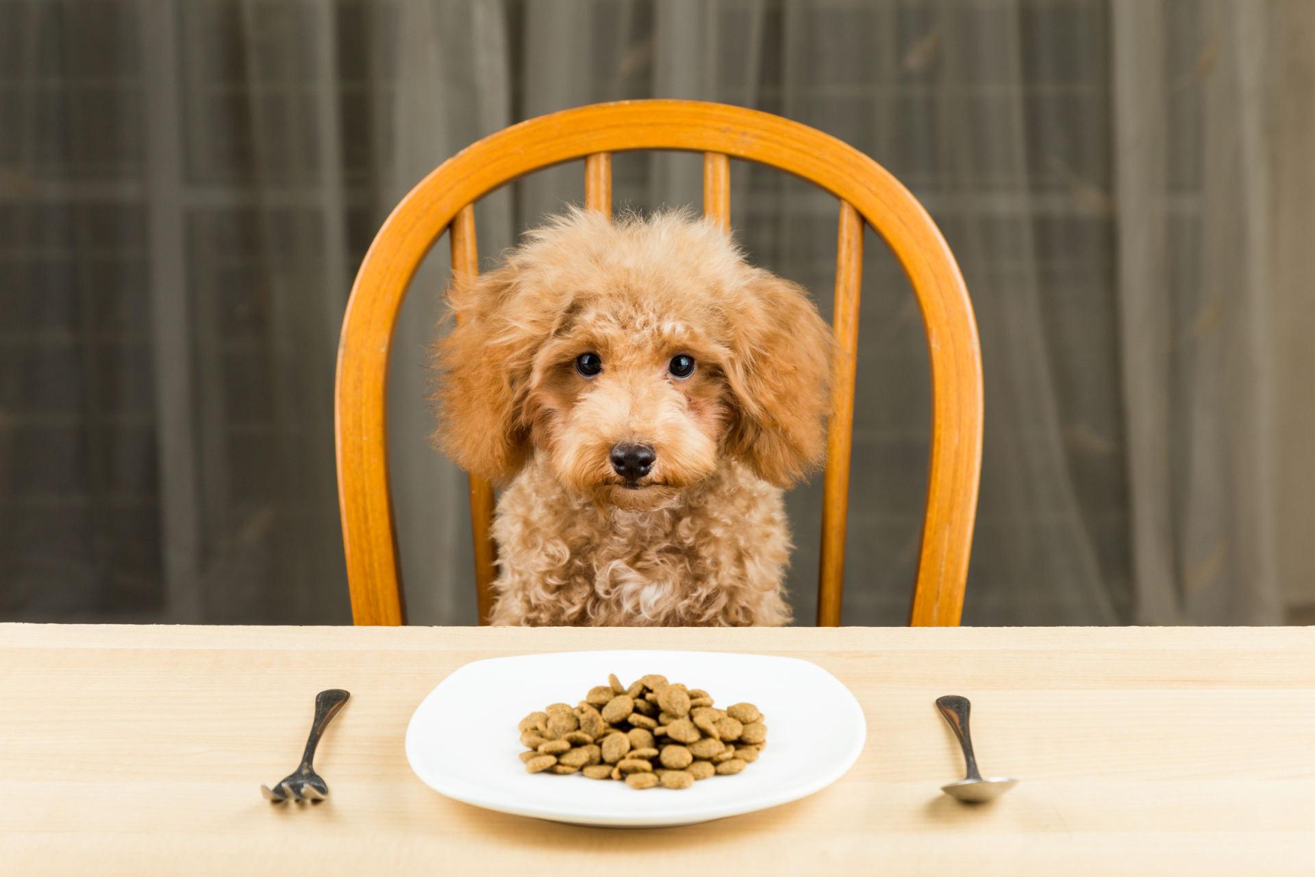 šuns širdies sveikatos dieta tachikardija ir hipertenzija kas tai yra