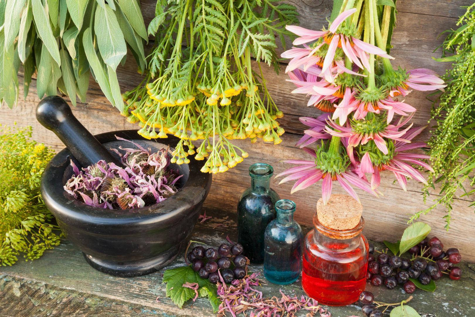 augalai, vartojami hipertenzijai gydyti konsultacija dėl hipertenzijos