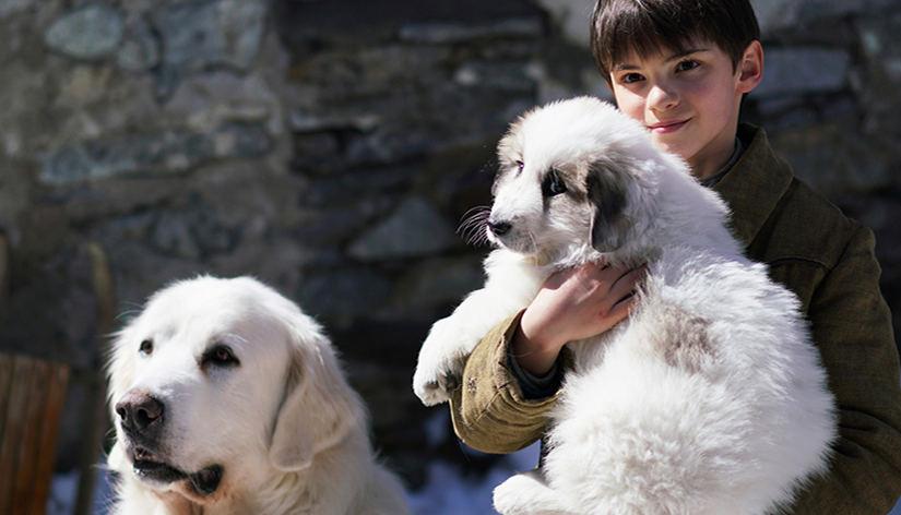 """Kadras iš filmo """"Gražuolė ir Sebastianas: draugai visam gyvenimui"""""""