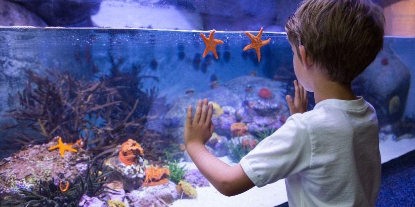 Akvariumas namuose – kaip išsirinkti tinkamą ir jį įrengti?