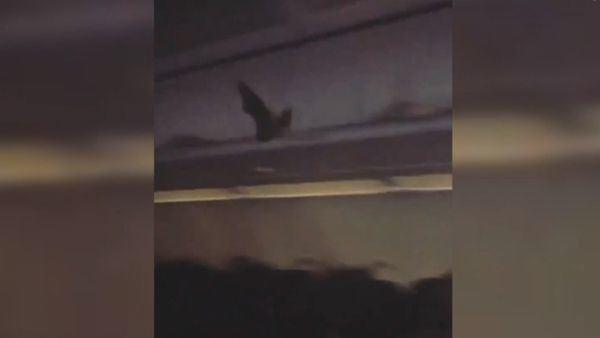 Šikšnosparnis lėktuve