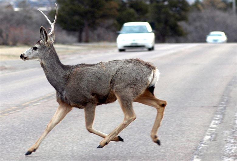 Gyvūnas ant kelio