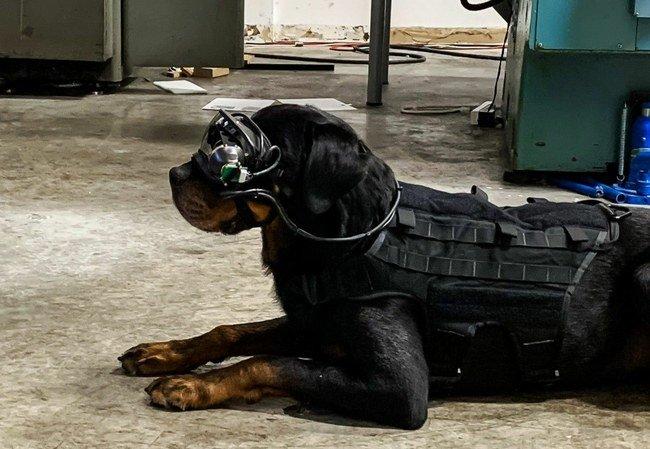 Šuo su papildytos realybės akiniais
