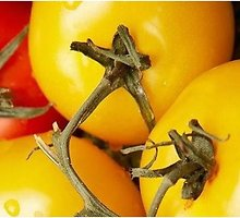 Karšti pomidorai