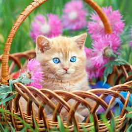 """""""Shutterstock"""" nuotr./Kačiukas"""