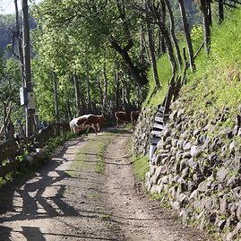 15min.lt/Raimondos Mikalčiūtės nuotr./Kelias Adžarijoje, Gruzijoje. Mokinius iki mokyklos 7 km veža 1,5 valandos.