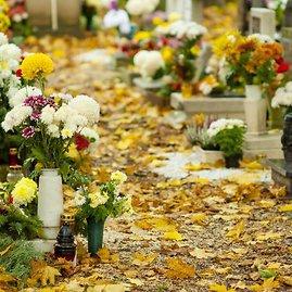 Shutterstock nuotr./Kokios gėlės labiausiai tinka Vėlinėms?