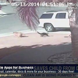 Stop kadras/Katinas-herojus išgelbėjo vaiką nuo žiaurios šuns atakos.