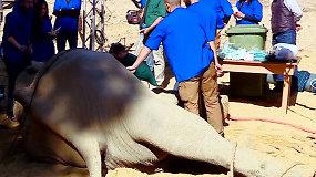 Kelerius metus laukta ilties operacija išgelbėjo dramblį nuo mirtino pavojaus