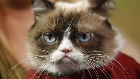 Internautų širdys sudaužytos: nugaišo interneto sensacija – katė Grumpy