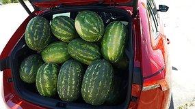 """Eksperimentas """"Ir į darbą, ir į sodą"""": kiek arbūzų telpa į naujosios """"Škoda Scala"""" bagažinę"""