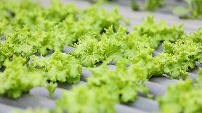 Gražių ir skanių salotų paslaptys