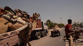 Tai Indija: autostopu keliaujantys lietuviai  jaučio tempiamu vežimu lenkia visus iš eilės