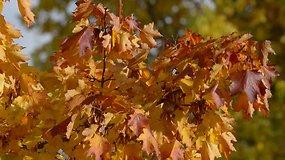 Saulės žaismas lapuose