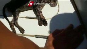 Italijos pareigūnai kačiukui atliko dirbtinį kvėpavimą