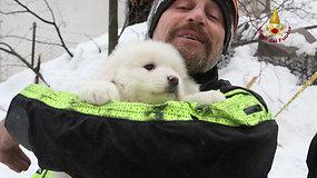 Dar vienas stebuklas Italijoje – po penkių parų iš lavinos gniaužtų išgelbėti trys šuniukai