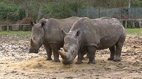 Prancūzijos zoologijos sode – neregėtas brakonierių įžūlumas