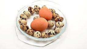 Kiaušinių įvairovė: susipažinkite su jų savybėmis