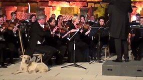 Klasikinės muzikos mėgėjus prajuokino scenoje pasirodęs šuo