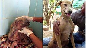 Keletą mėnesių savanorių slaugytas šuo pasikeitė neatpažįstamai