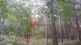 Skaitytoja nufilmavo atvira ugnimi liepsnojusį medį Vilniaus Vingio parke