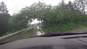 Skaitytojas kelyje Utena—Ukmergė užfiksavo kelią užvertusius medžius