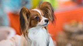 Veterinarijos gydytoja įspėja: šunims pavojų kelia ne tik erkės, bet ir uodai