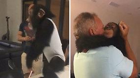 Akimirka, nepaliekanti abejingų: šimpanzė susitinka su ją užauginusiais globėjais