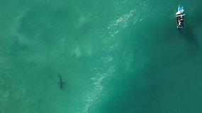 Banglentininkų varžybas nutraukė didysis baltasis ryklys