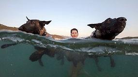 Šunys ir jų šeimininkai Adrijos jūroje kovojo dėl greičiausiųjų titulo