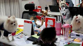 Tailando įmonės rado unikalų būdą, kaip mažinti darbuotojų stresą