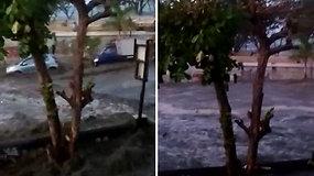 Paviešinta tragiška akimirka, kai pirmoji cunamio banga nuplauna Sulavesio salą