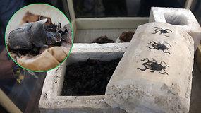 Retas radinys Egipte: archeologai aptiko mumifikuotų skarabėjų kolekciją