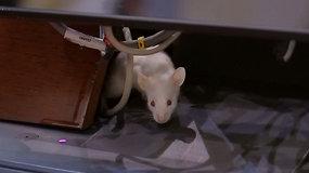 Dėl netikėto pokšto spiegiantys politikai sustabdė darbą – išsigando vos kelių žiurkių