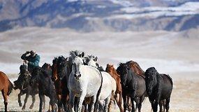Šimtai baltu lauku pasileidusių žirgų užbūrė kerinčiu vaizdu