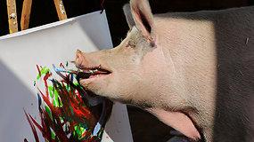 Fenomenali kiaulė turi kontraktą su tarptautine kompanija – už jos paveikslus moka tūkstančius