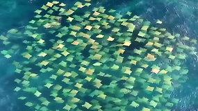 Retas reginys: iš paukščio skrydžio nufilmuotas magiškas rajų būrys