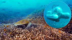 Pirmoji tokia paslauga pasaulyje: plaukiant povandeniniu laivu apžiūrėti Didįjį barjerinį rifą