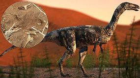 Mažas, bet mirtinai pavojingas: unikali letena padėjo identifikuoti naują dinozaurų rūšį