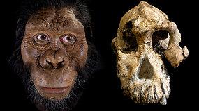Mokslininkas nepatikėjo savo akimis: rasta kaukolė verčia abejoti ilgai gyvavusia prielaida apie žmonių evoliuciją