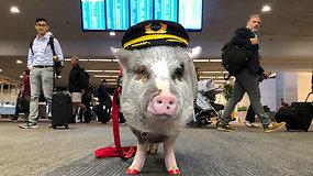 Pirmoji pasaulyje tokia oro uosto darbuotoja vagia visų dėmesį: skraidyti negali, bet sumažina keleivių stresą
