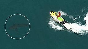 Pasiplaukiojimas virto tragedija: banglentininką mirtinai sužalojo 3 m ilgio ryklys