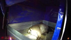 Trakų policijos laimikis – taurųjį elnią sumedžioję brakonieriai