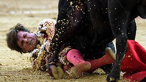 Per koridą Kolumbijoje 485 kg bulius užpuolė matadorą