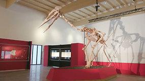Vieno unikaliausių dinozaurų kaulai eksponuojami Vokietijos muziejuje